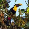 Ecuadorian Nature Reserves Provide Dazzling Bird Displays