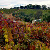 Sip, Taste and Rest in California's Shenandoah Valley Wine Trail