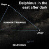 The Stellar Dolphin