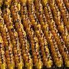 Overpopulation Hoax