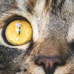 Colorful Reflector in Cat's Eye Enhances Night Vision
