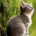 Cats With Extra Toes Nicknamed 'Hemingway Cats'