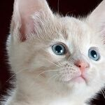 Pets Can Develop Compulsive Disorders