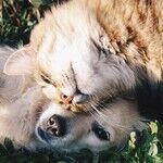 Punishment After Misbehavior Ineffective, Instills Fear in Dog