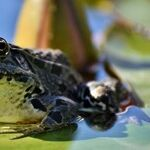 Toads Release Toxins That Harm Pets
