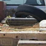 Dangerous to Transport Dog in Bed of Pickup Truck