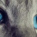Many Treatment Options for Feline Hyperthyroidism