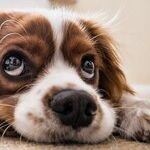 Treatments Help Dogs With ALS-Like Disease