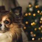 Don't Give a Dog a Bone for Christmas