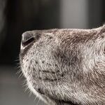 Many Effective Therapies for Dogs With Osteoarthritis