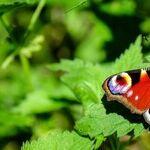 Mercury, Social Butterfly