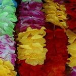 Winter Leis