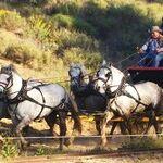 Galloping Away From Wells Fargo