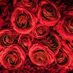 Celebrity Valentines Go Big
