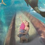 Atlantis Paradise Island Makes Both Fun and Marine History