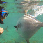 Curacao: Animal Encounters of the Best Kind
