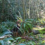 Away From It All on Salt Spring Island