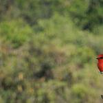 Go Winter Birding in Western Mexico