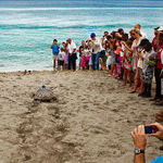 Watch the Tagging of Sea Turtles in Nevis