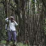 A Gorilla-Trekking Adventure in Rwanda