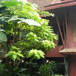 Jim Thompson House Is a Hidden Gem in Bangkok