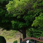 Celebrate Nina Simone in Tryon, North Carolina