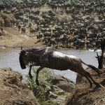 Dream Trips: African Safaris in Kenya and Zambia