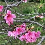 Okinawa: Sunny Island of the Immortals