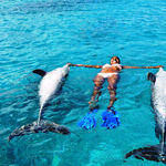 Underwater and Overwater Animal Encounters in Curacao