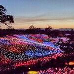 'Field of Light at Sensorio' Illuminates the Hills of Paso Robles