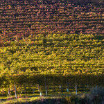 Wine Gifts: A Trio of Glorious Reds