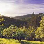Napa Dominates Winemaker Challenge
