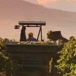 Winery to Watch: Domaine Du Mont-Epin