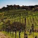 Winery to Watch: Lightpost