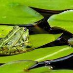 Keeping the Frogs in the Wheelbarrow