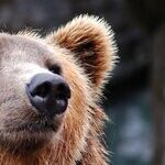 Do You Know the 'Bear' Facts of Usage?