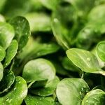 Yes, It's a No-Brainer: Stay Active and Eat Your Greens