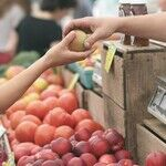 Organic or Conventional? Why the Dirty Dozen Matters