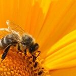 Pesticides and the Death of Honeybees