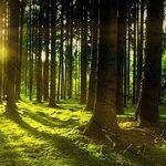 Sun Rising on Role of Vitamin D in COVID-19 Fight