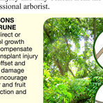 Fall Tree Pruning