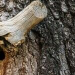 Dealing with Tree Cavities