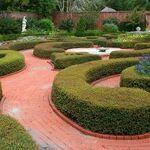 Topiary Designs