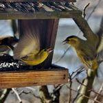 Preparing Bird Feeders