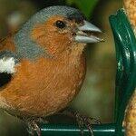 The Best Bird Feeders