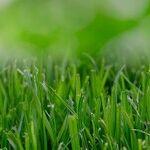 Have a Healthy Lawn
