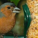 Bird Feeders, Birdbaths and Birdseed