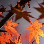 Leaf Blowers