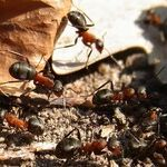 Readers in Search of Help with Ants and Sharks