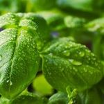 Plant an Edible Garden No Matter Where You Are or What You Have